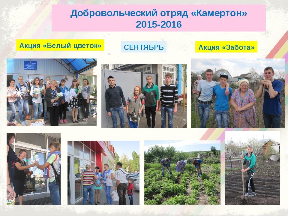 Добровольческий отряд «Камертон» 2015-2016 Акция «Белый цветок» Акция «Забота...