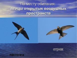 По месту обитания: птицы открытых воздушных пространств ласточка