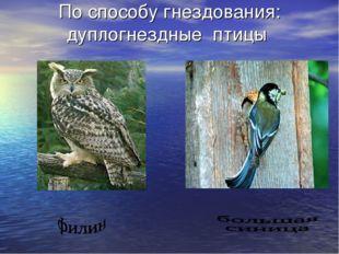 По способу гнездования: дуплогнездные птицы
