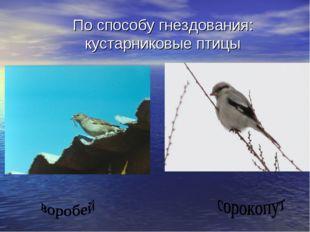 По способу гнездования: кустарниковые птицы