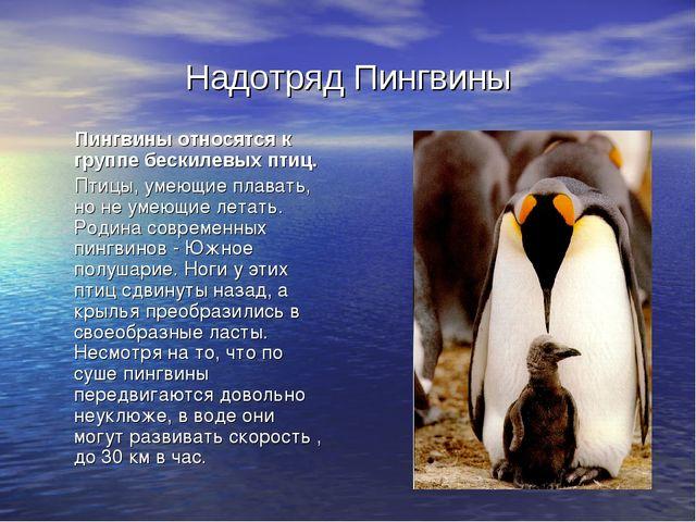 Надотряд Пингвины Пингвины относятся к группе бескилевых птиц. Птицы, умеющие...