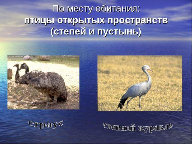 По месту обитания: птицы открытых пространств (степей и пустынь)
