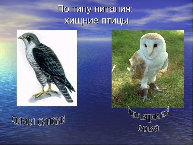 По типу питания: хищние птицы