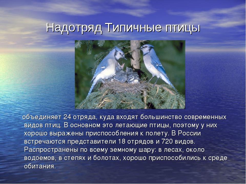 Надотряд Типичные птицы объединяет 24 отряда, куда входят большинство совреме...