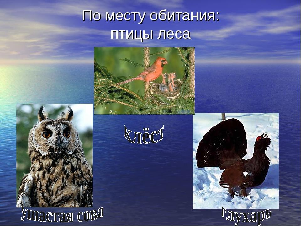По месту обитания: птицы леса