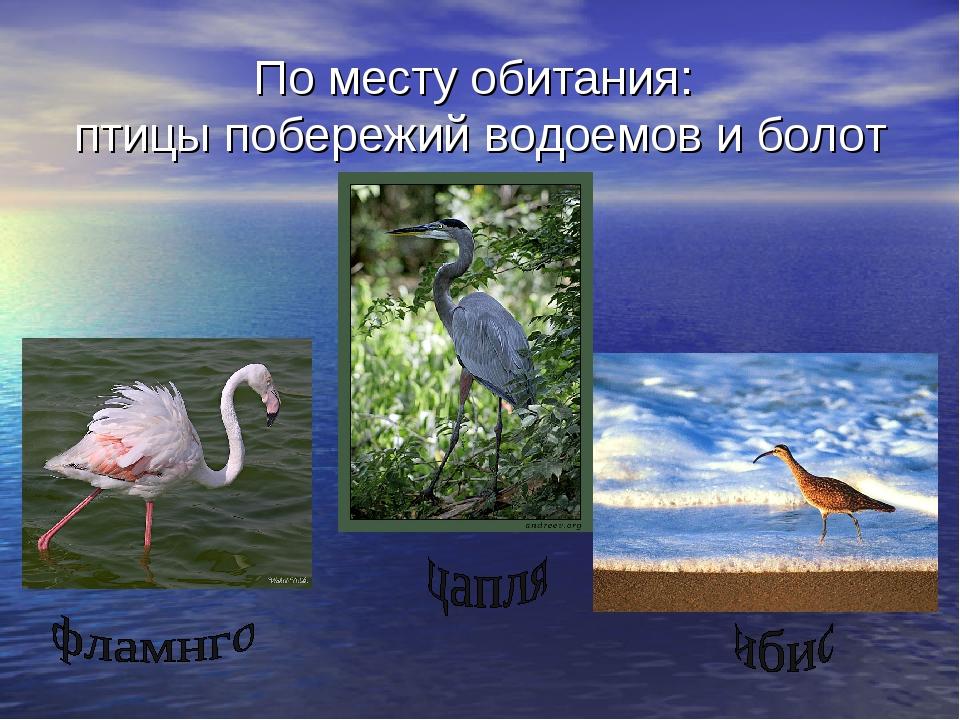 По месту обитания: птицы побережий водоемов и болот