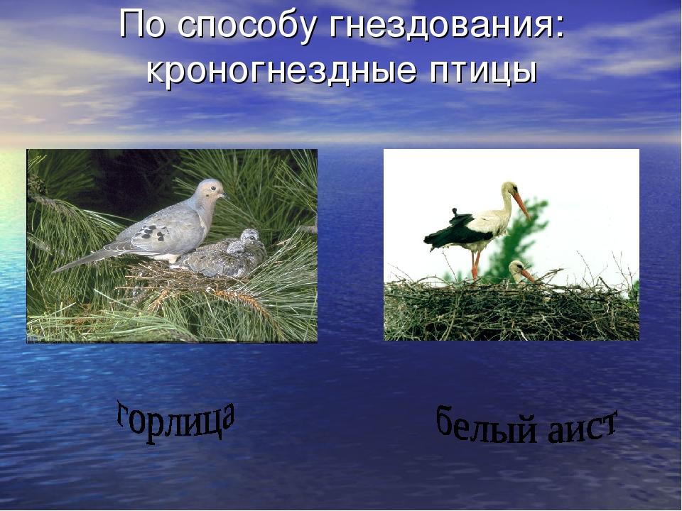 По способу гнездования: кроногнездные птицы