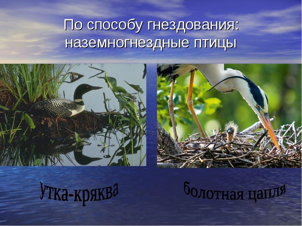По способу гнездования: наземногнездные птицы