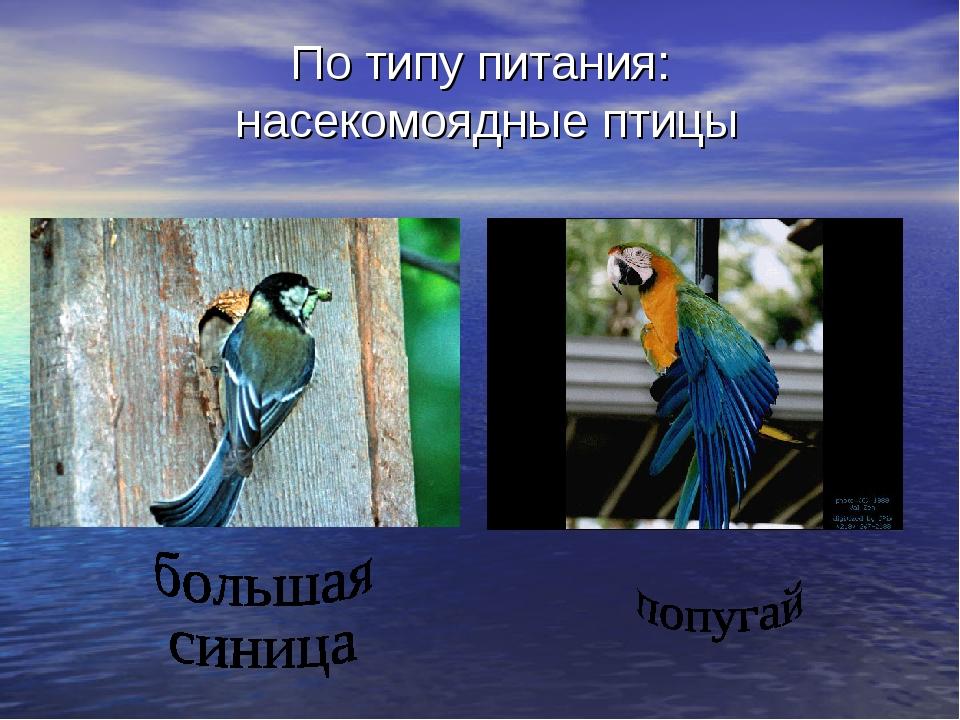 По типу питания: насекомоядные птицы