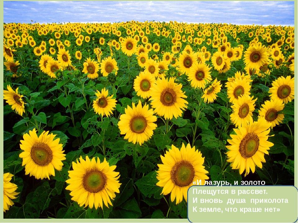 «И лазурь, и золото Плещутся в рассвет. И вновь душа приколота К земле, что...