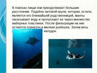 В поисках пищи они преодолевают большие расстояния. Подобнокитовой акуле, ко