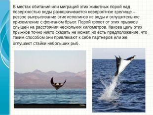В местах обитания или миграций этих животных порой над поверхностью воды разв