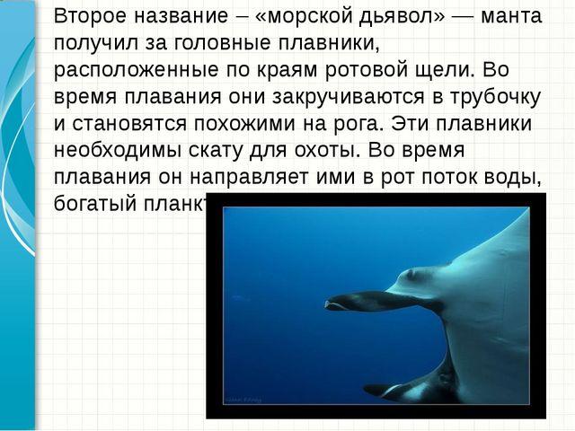 Второе название – «морской дьявол» — манта получил за головные плавники, рас...