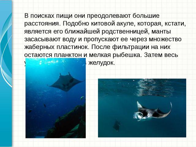 В поисках пищи они преодолевают большие расстояния. Подобнокитовой акуле, ко...