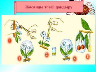 1. Тозаңдану 2. Жатынға түсуі 3. Ұрықтану 4. Жеміс және тұқым Гүлді өсімдікт