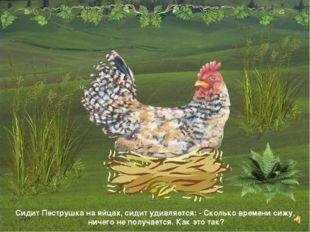 Сидит Пеструшка на яйцах, сидит удивляется: - Сколько времени сижу, ничего не