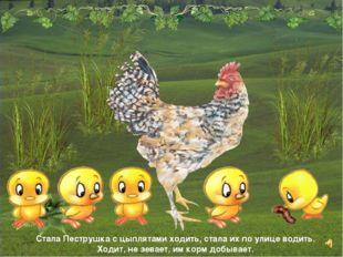Стала Пеструшка с цыплятами ходить, стала их по улице водить. Ходит, не зевае