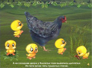 А на соседнем дворе у Хохлатки тоже вывелись цыплятки. Из пяти яичек пять пуш