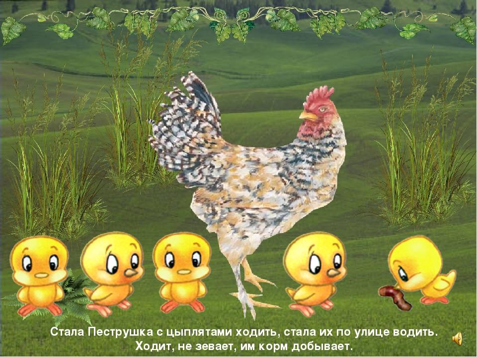 Стала Пеструшка с цыплятами ходить, стала их по улице водить. Ходит, не зевае...