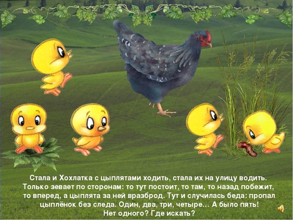 Стала и Хохлатка с цыплятами ходить, стала их на улицу водить. Только зевает...