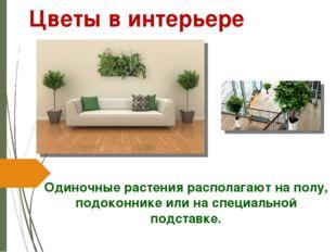 Одиночные растения располагают на полу, подоконнике или на специальной подста