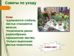 Советы по уходу Если: удлиняется стебель, листья становятся мельче; позеленел