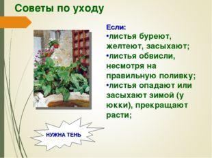 Советы по уходу Если: листья буреют, желтеют, засыхают; листья обвисли, несмо