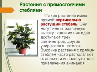 Растения с прямостоячими стеблями Такие растения имеют прямой вертикально рас