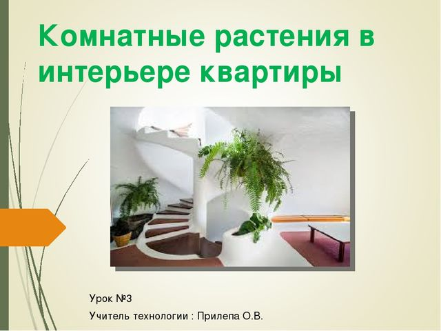 Комнатные растения в интерьере квартиры Урок №3 Учитель технологии : Прилепа...