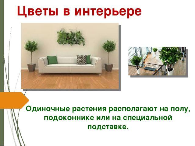 Одиночные растения располагают на полу, подоконнике или на специальной подста...