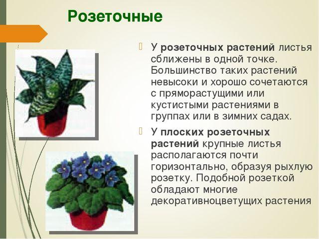 Розеточные У розеточных растений листья сближены в одной точке. Большинство т...