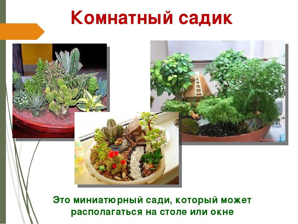 Это миниатюрный сади, который может располагаться на столе или окне Комнатный...