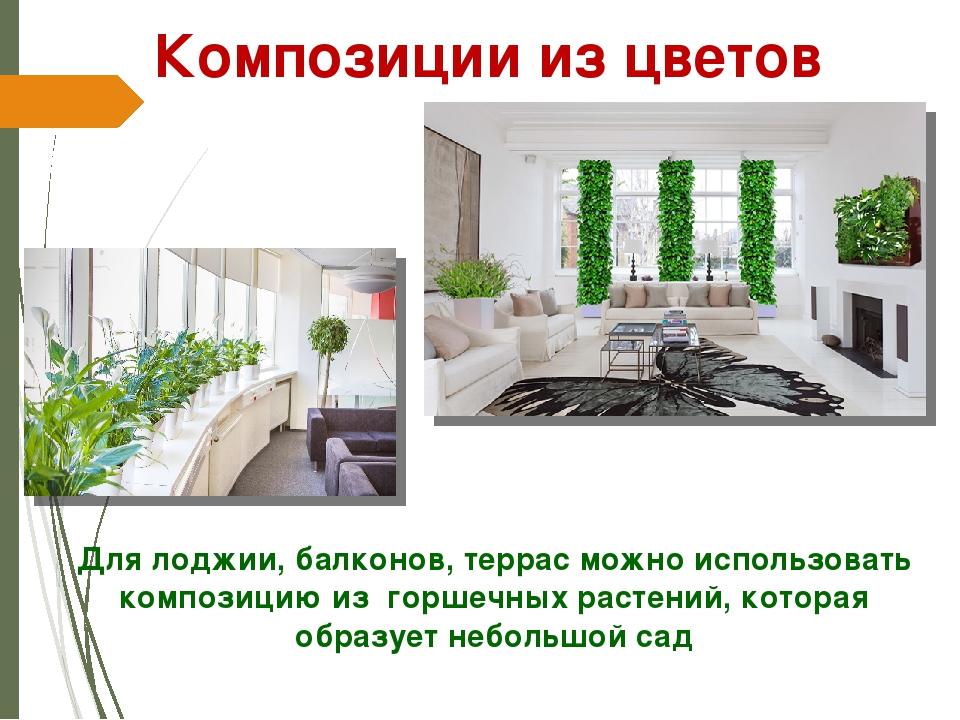 Для лоджии, балконов, террас можно использовать композицию из горшечных расте...