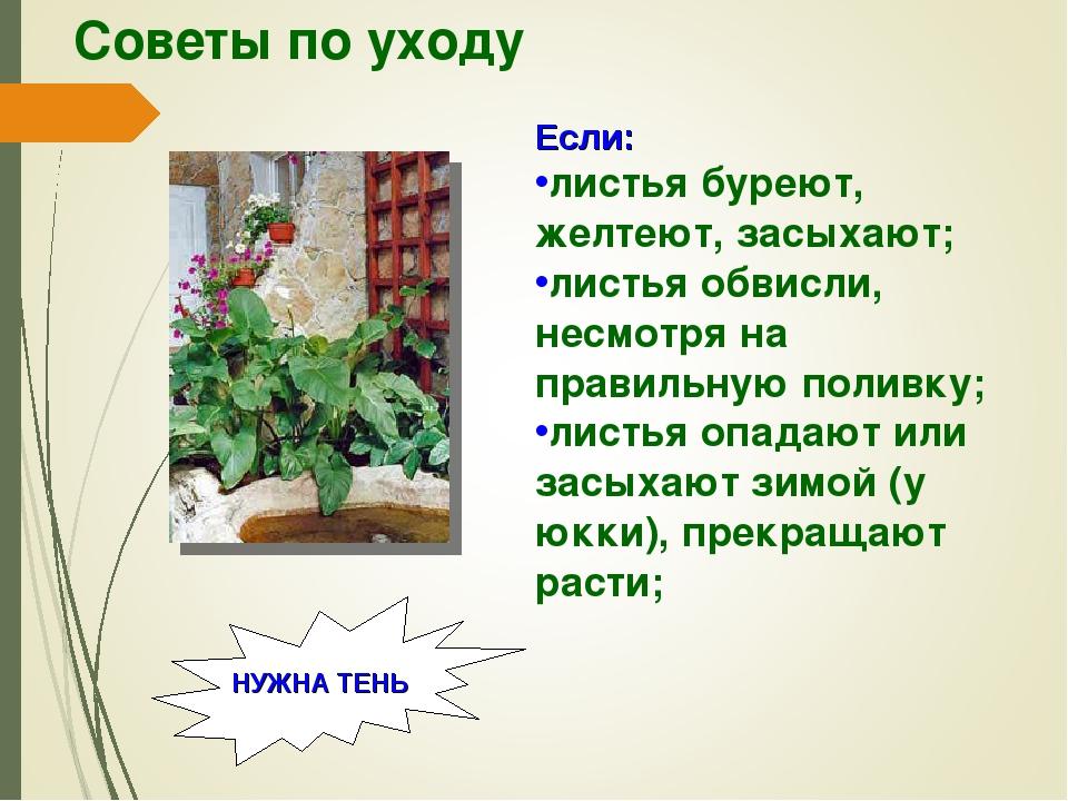 Советы по уходу Если: листья буреют, желтеют, засыхают; листья обвисли, несмо...