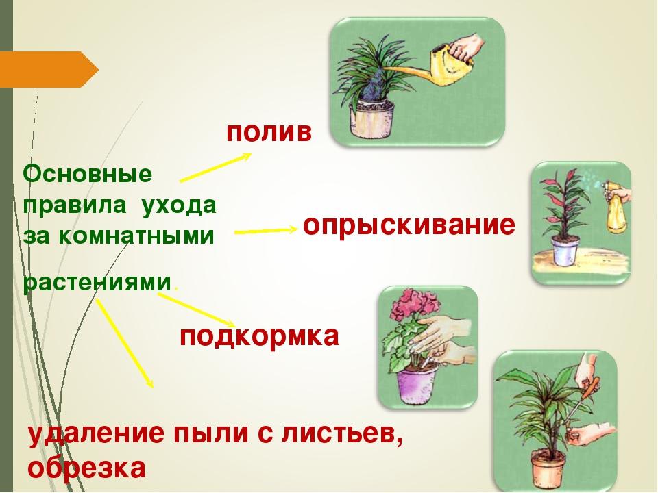 Основные правила ухода за комнатными растениями. полив опрыскивание подкормка...
