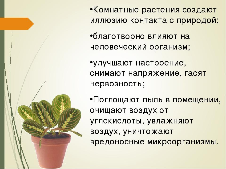 Комнатные растения создают иллюзию контакта с природой; благотворно влияют на...