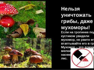 Нельзя уничтожать грибы, даже мухоморы! Если на тропинке под кустиком увидели