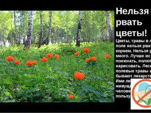 Нельзя рвать цветы! Цветы, травы в лесу, в поле нельзя рвать с корнем. Нельзя