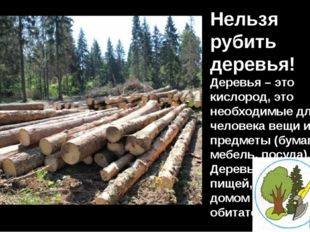 Нельзя рубить деревья! Деревья – это кислород, это необходимые для человека в