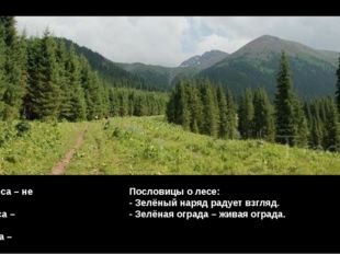 Много леса – не губи, Мало леса – береги, Нету леса – посади. Пословицы о лес