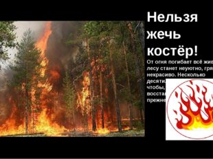 Нельзя жечь костёр! От огня погибает всё живое. В лесу станет неуютно, грязно