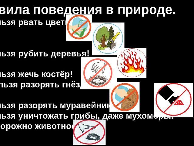 Правила поведения в природе. Нельзя рвать цветы! Нельзя рубить деревья! Нельз...
