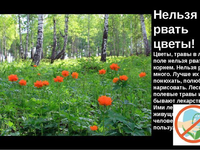 Нельзя рвать цветы! Цветы, травы в лесу, в поле нельзя рвать с корнем. Нельзя...