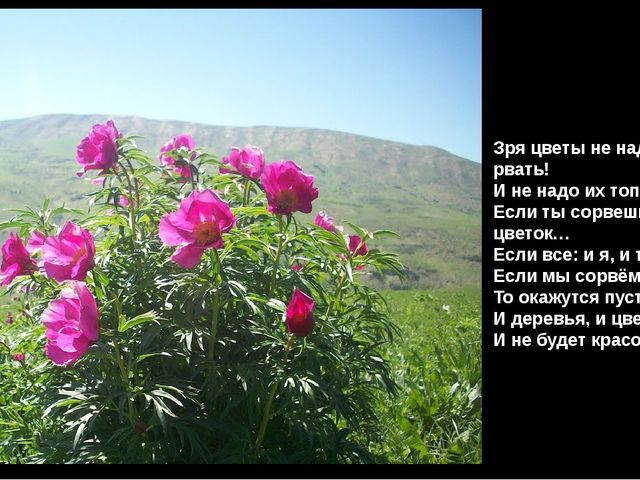 Зря цветы не надо рвать! И не надо их топтать. Если ты сорвешь цветок… Если в...
