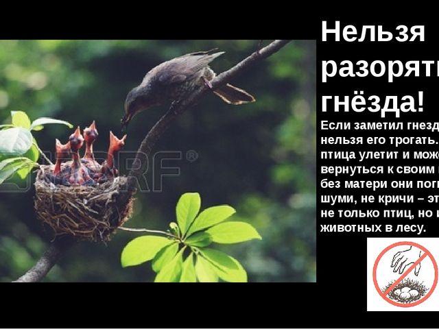 Нельзя разорять гнёзда! Если заметил гнездо: нельзя его трогать. Мама-птица у...