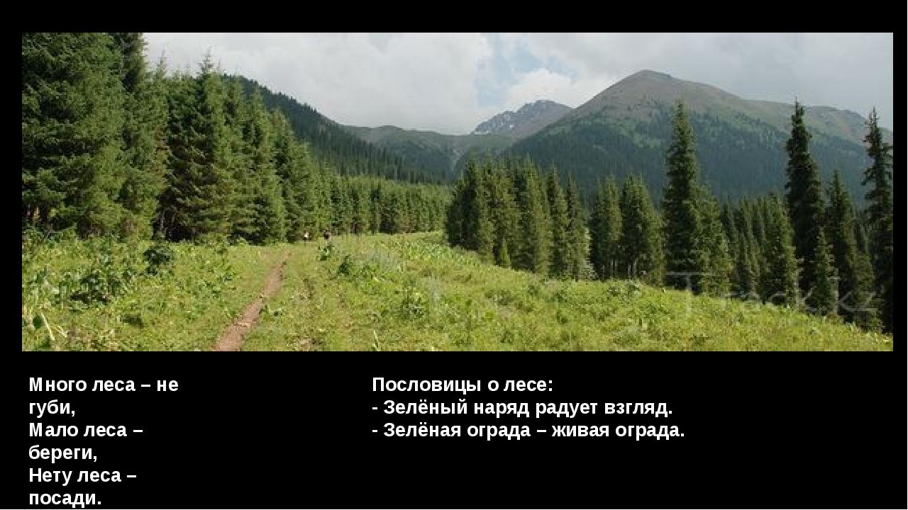 Много леса – не губи, Мало леса – береги, Нету леса – посади. Пословицы о лес...
