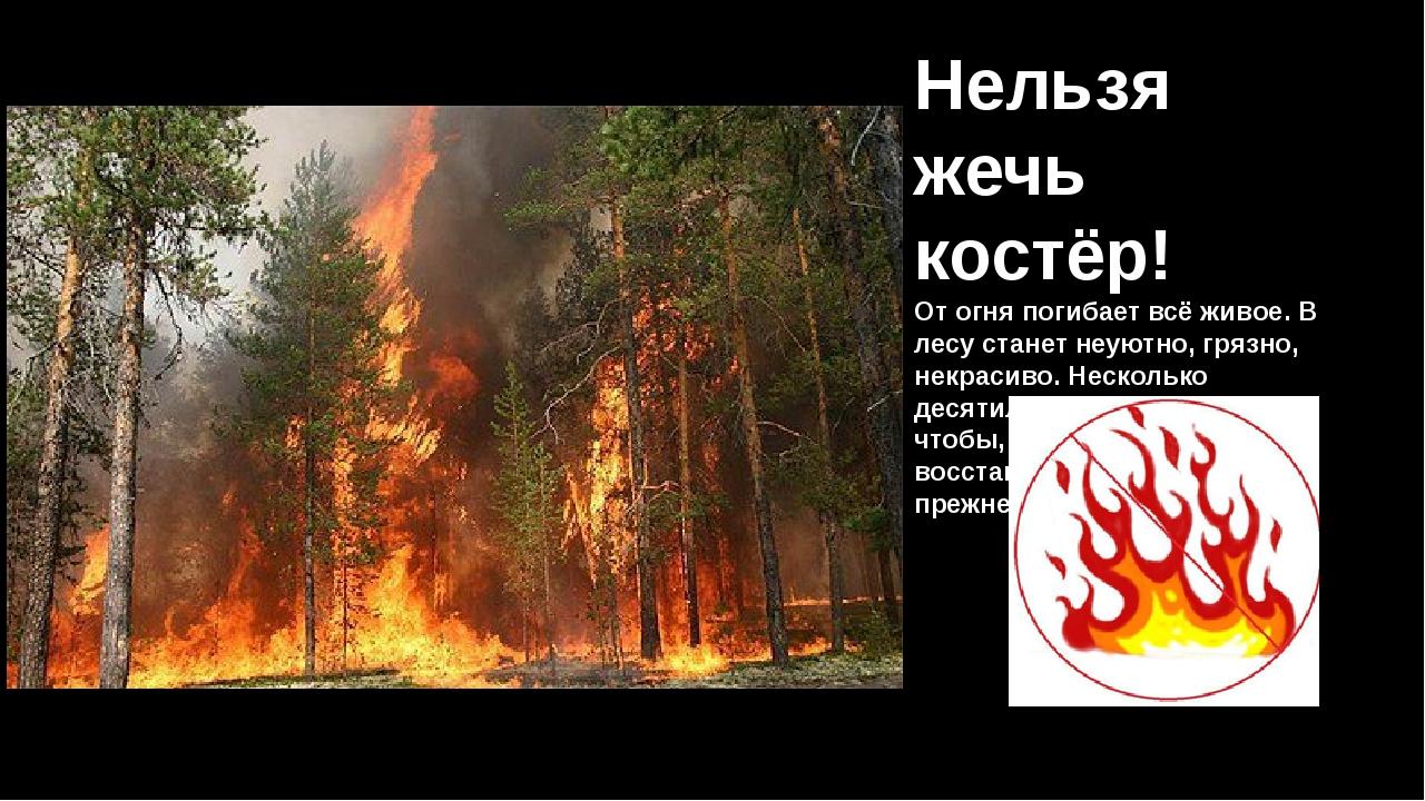 Нельзя жечь костёр! От огня погибает всё живое. В лесу станет неуютно, грязно...
