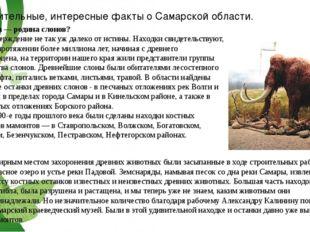 Удивительные, интересные факты о Самарской области. Самара — родина слонов? Э