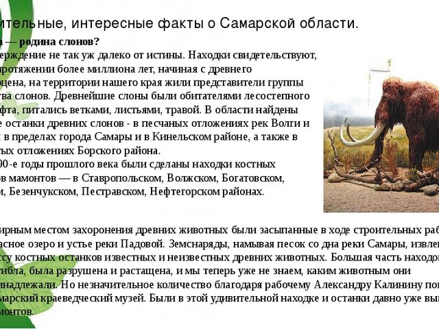 Удивительные, интересные факты о Самарской области. Самара — родина слонов? Э...