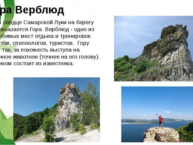 гора Верблюд В самом сердце Самарской Луки на берегу Волги возвышается Гора В...